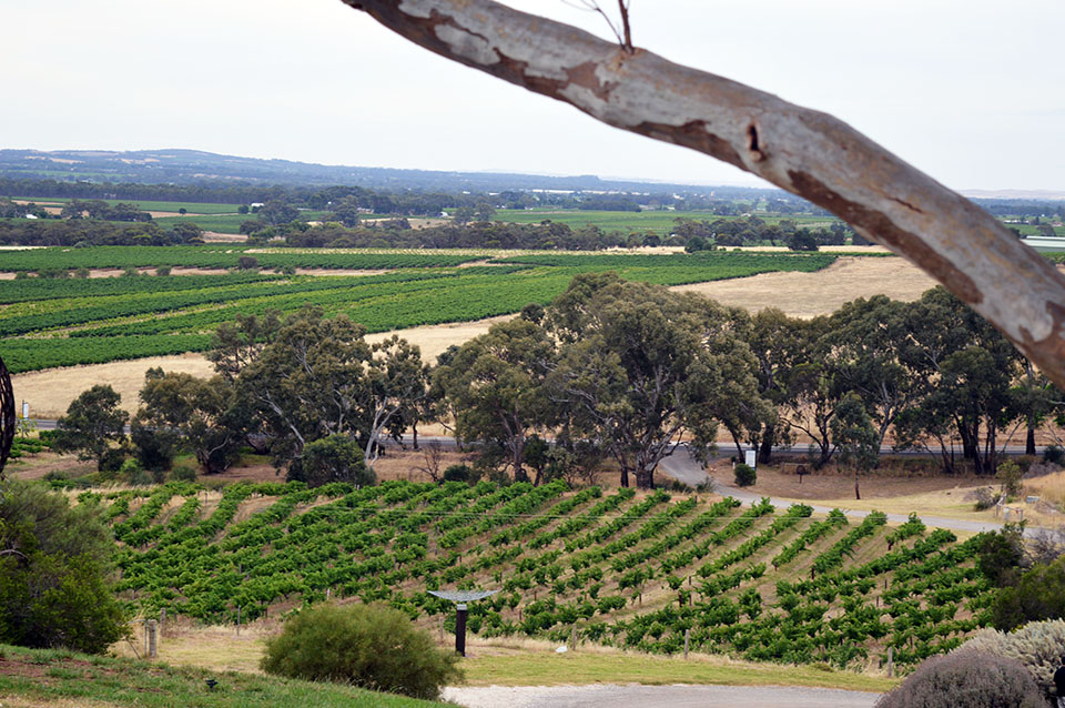 australia adventures barossa valley
