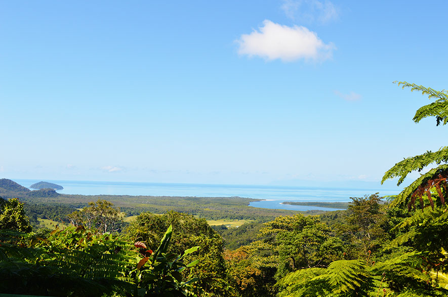 cape tribulation 8