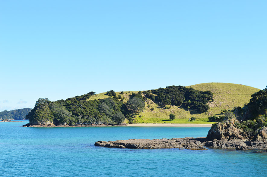 bay of islands dolphin cruise (8)